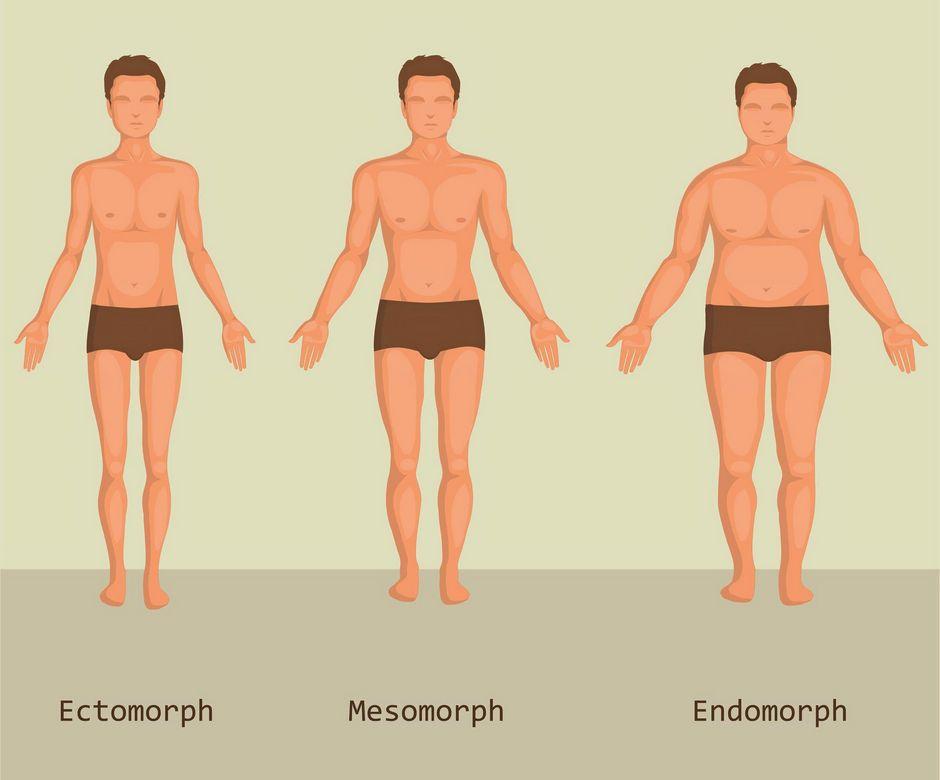 gradja tijela, ovisi o metabolizmu