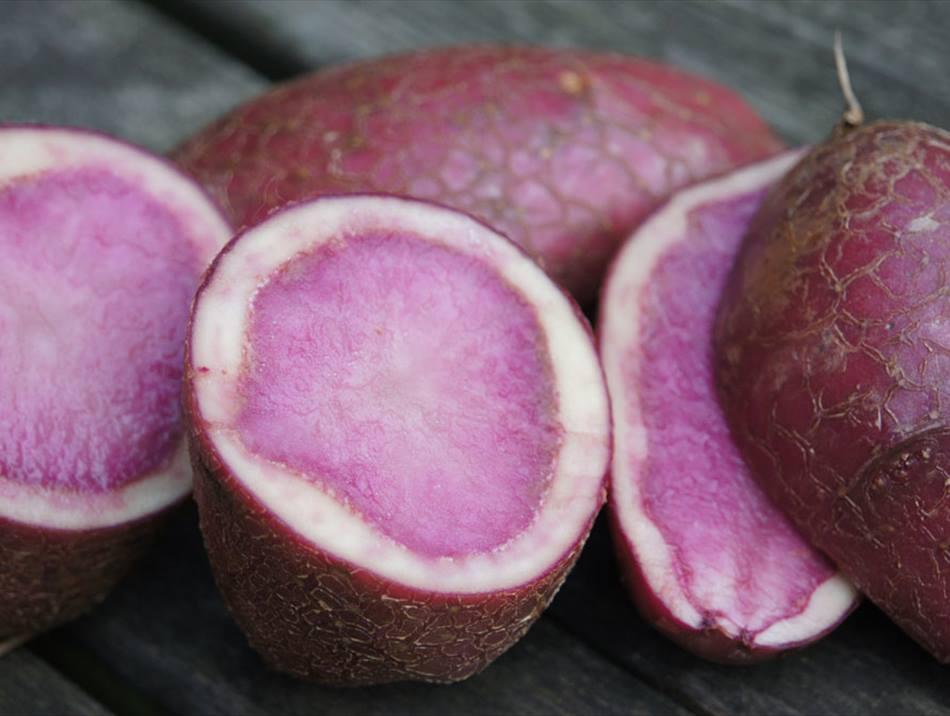 čičoka krumpir