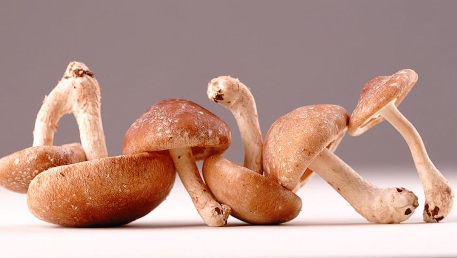 shiitaki gljive